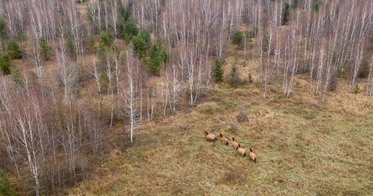 Foto: Černobylská radiační a ekologická biosférická rezervace (http://zapovidnyk.org.ua)