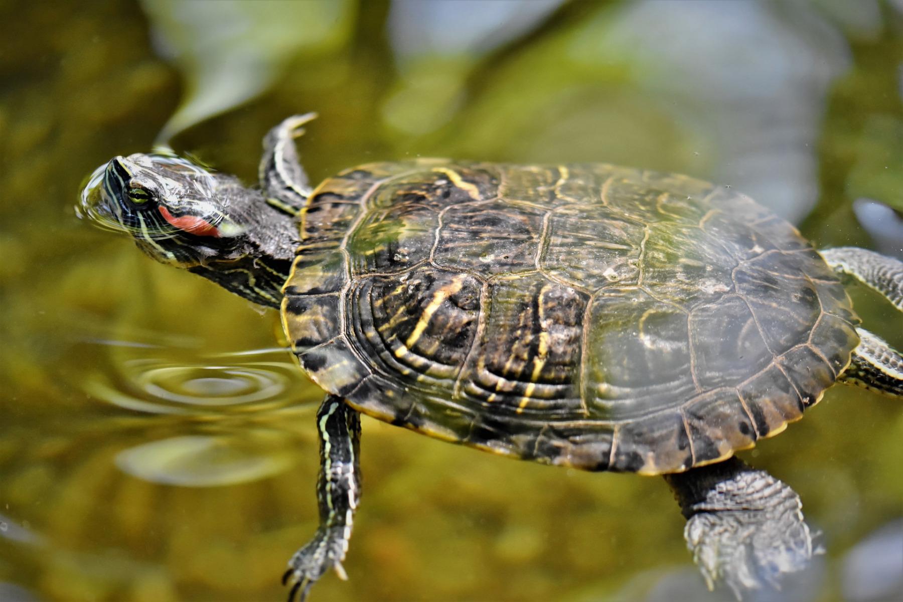 turtles-4832203_1920