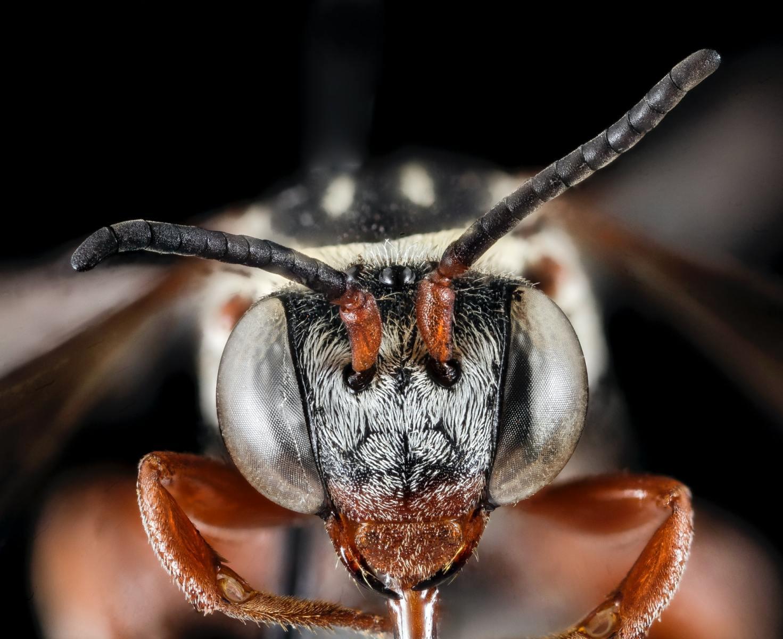 Když se hmyz divá