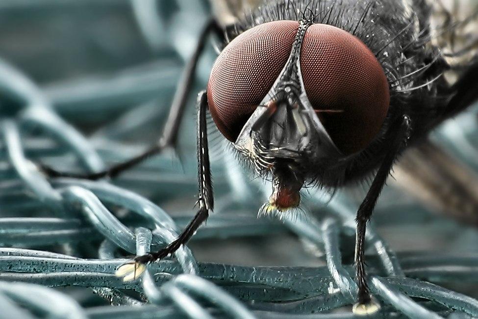 Když se hmyz dívá