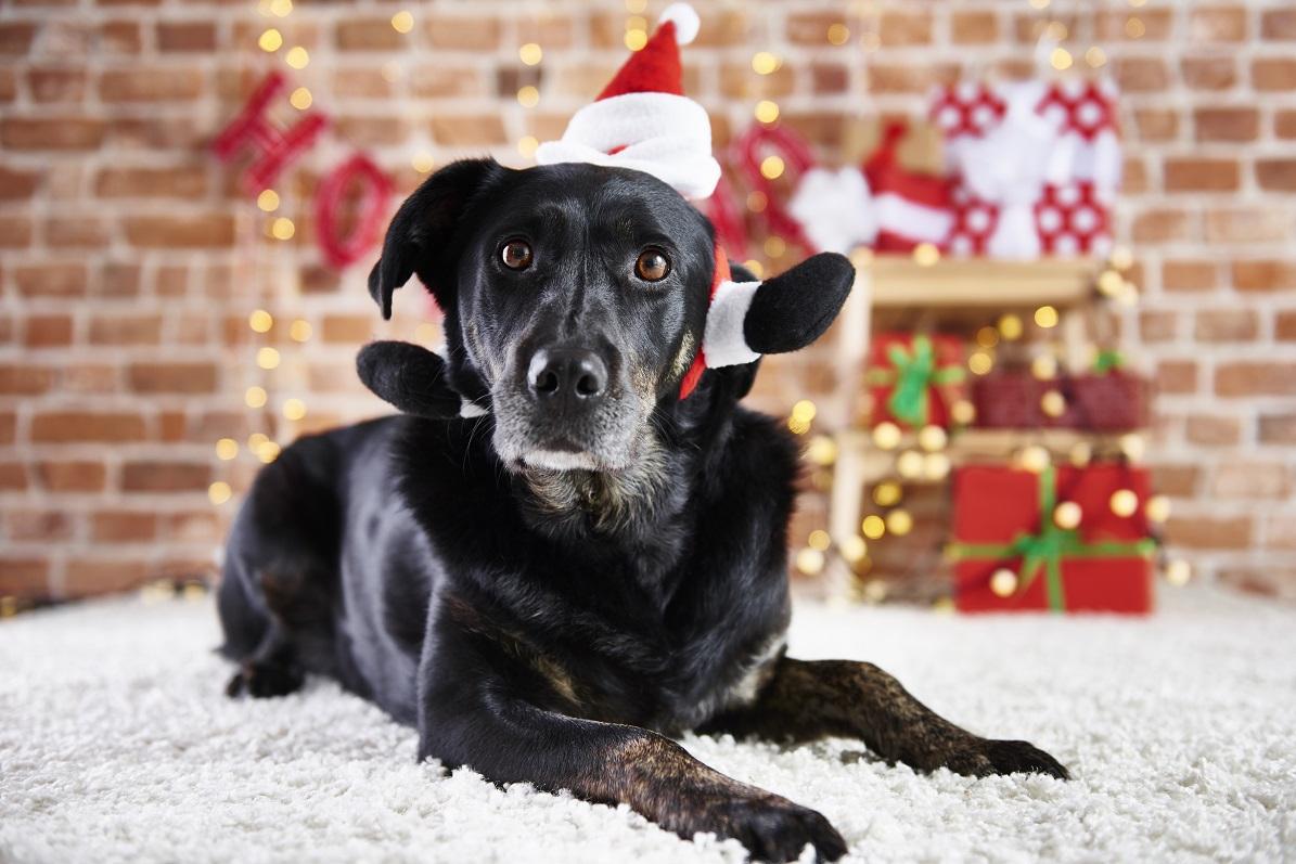 Mazlíčci a Vánoce. Foto: Freepik