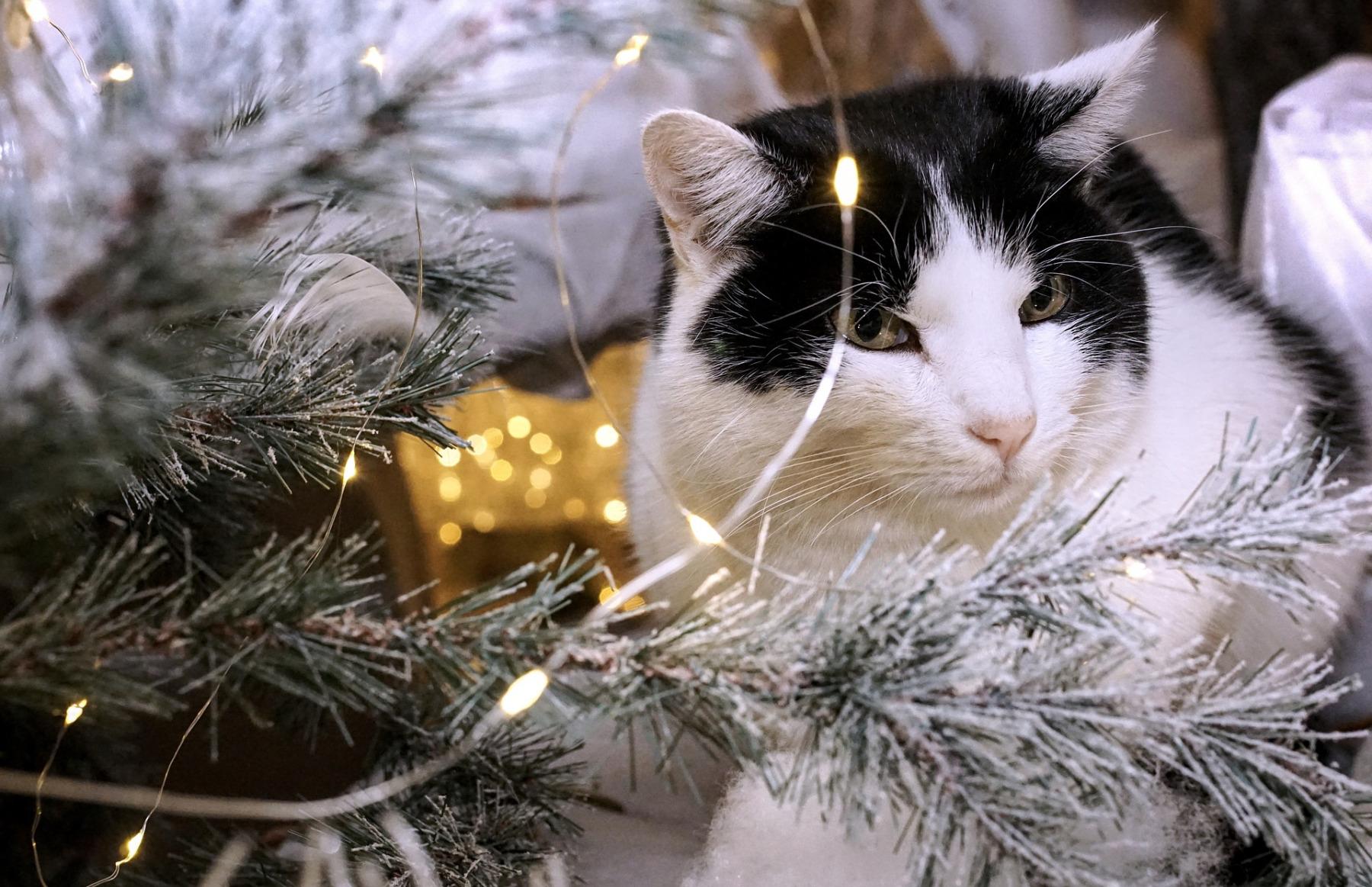 Mazlíčci a Vánoce. Foto: Pixabay