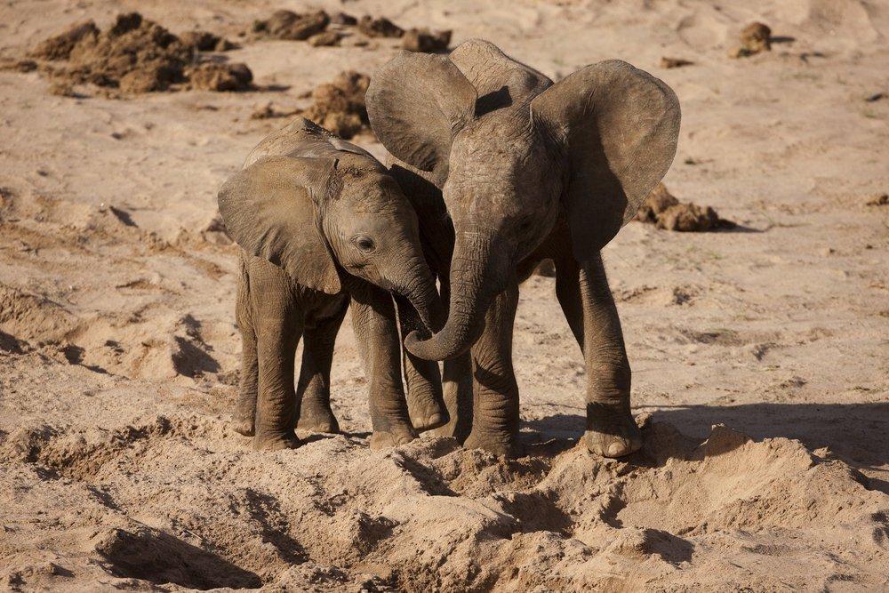 Národní rezervace Masai Mara v Keni