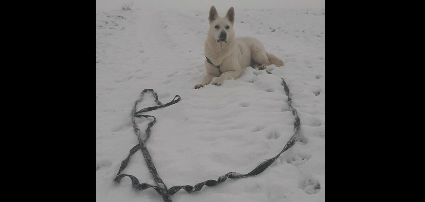 pes-s-voditkem