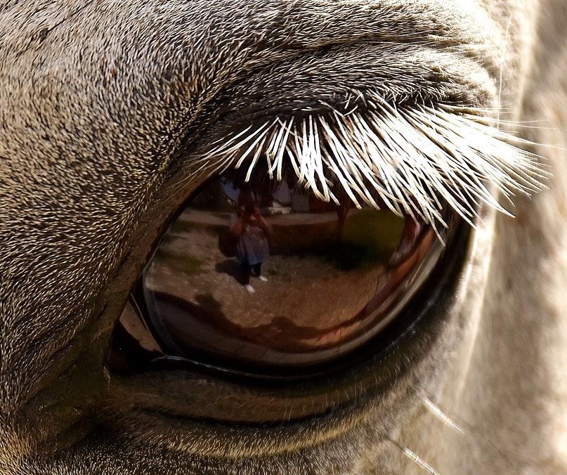 Kůň. Zdroj: Pixabay