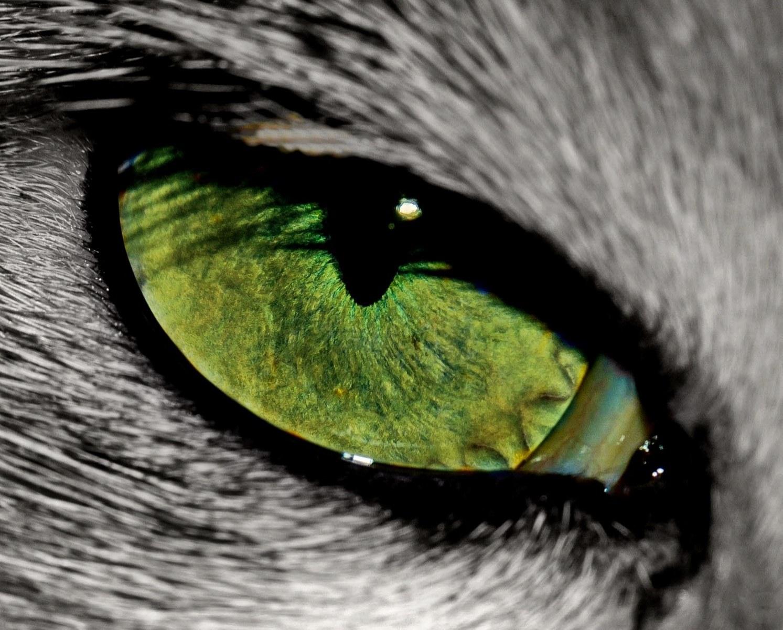 Kočka. Zdroj: Pixabay