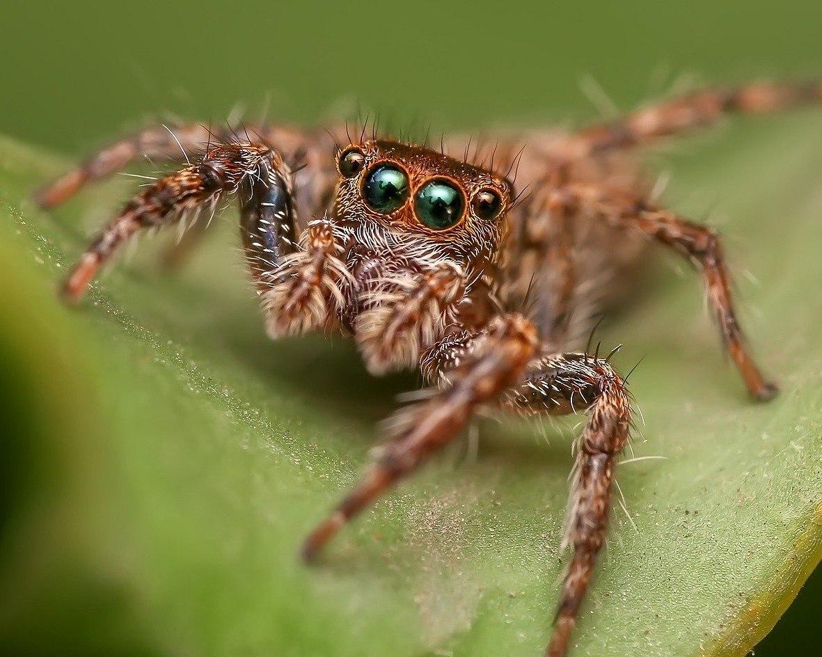 Pavouk. Zdroj: Pixabay