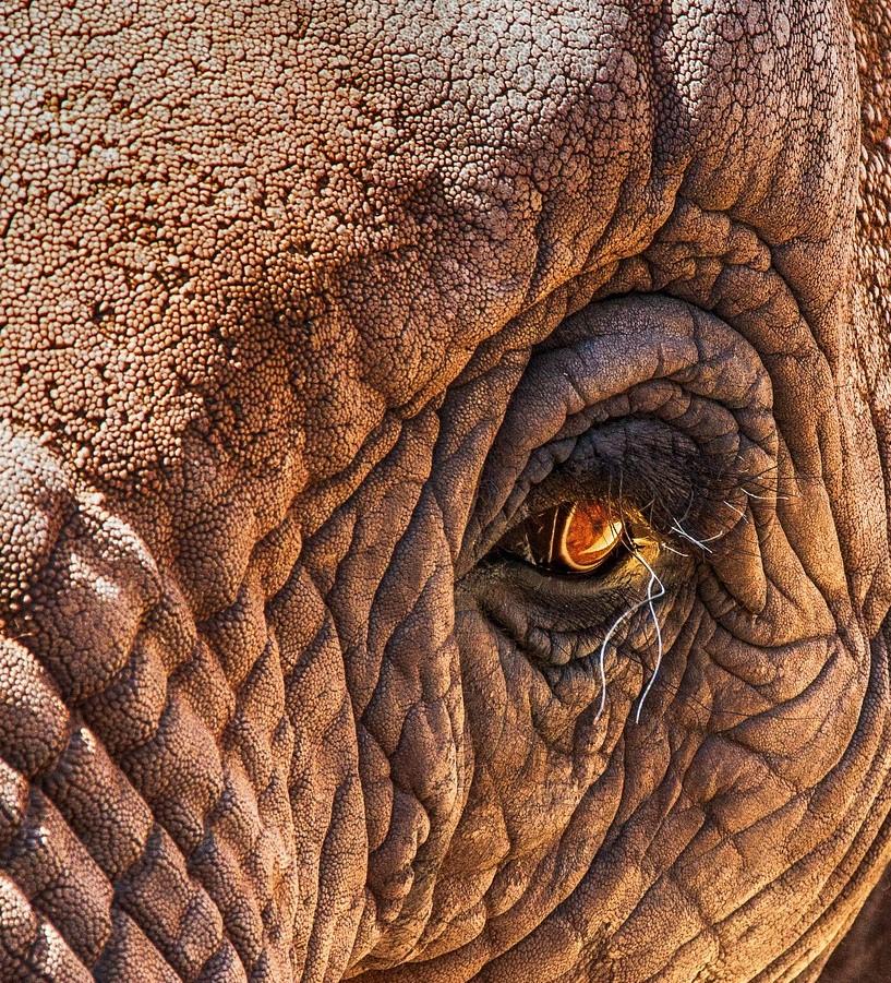 Slon. Zdroj: Pixabay
