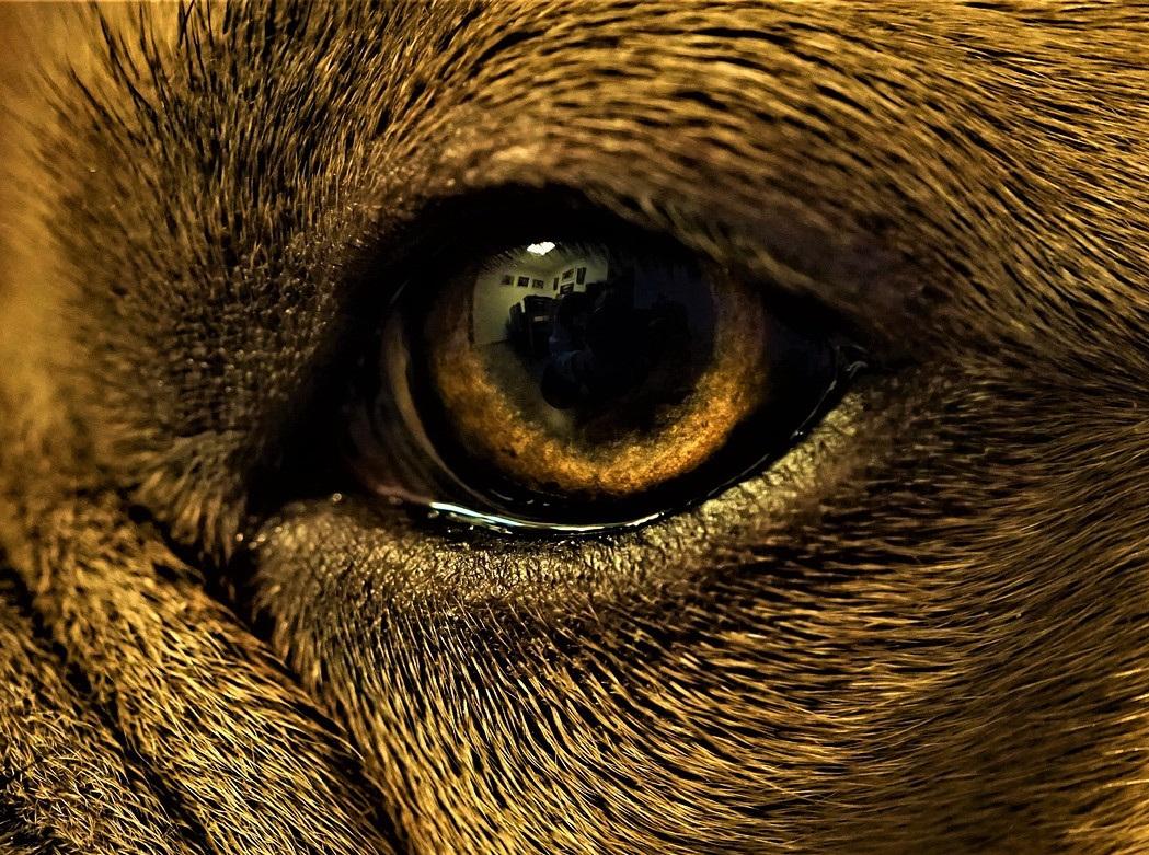 Pes. Zdroj: Pixabay