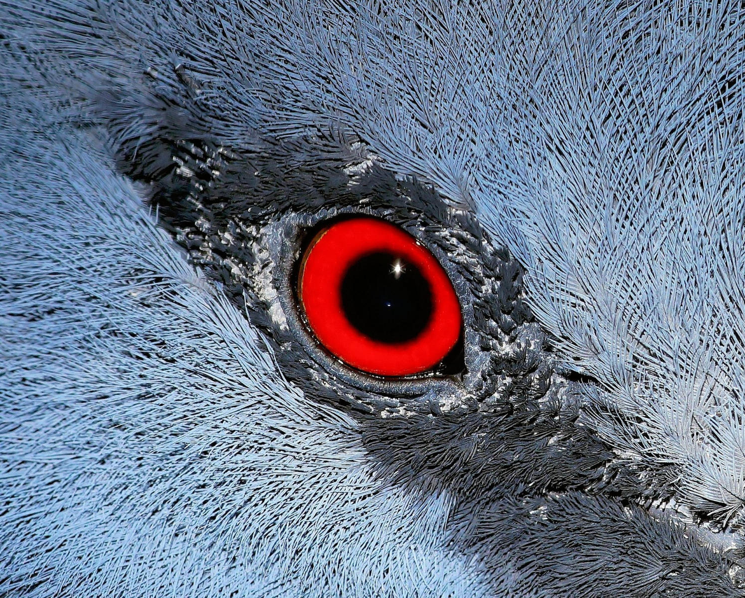 Pták. Zdroj: Pixabay