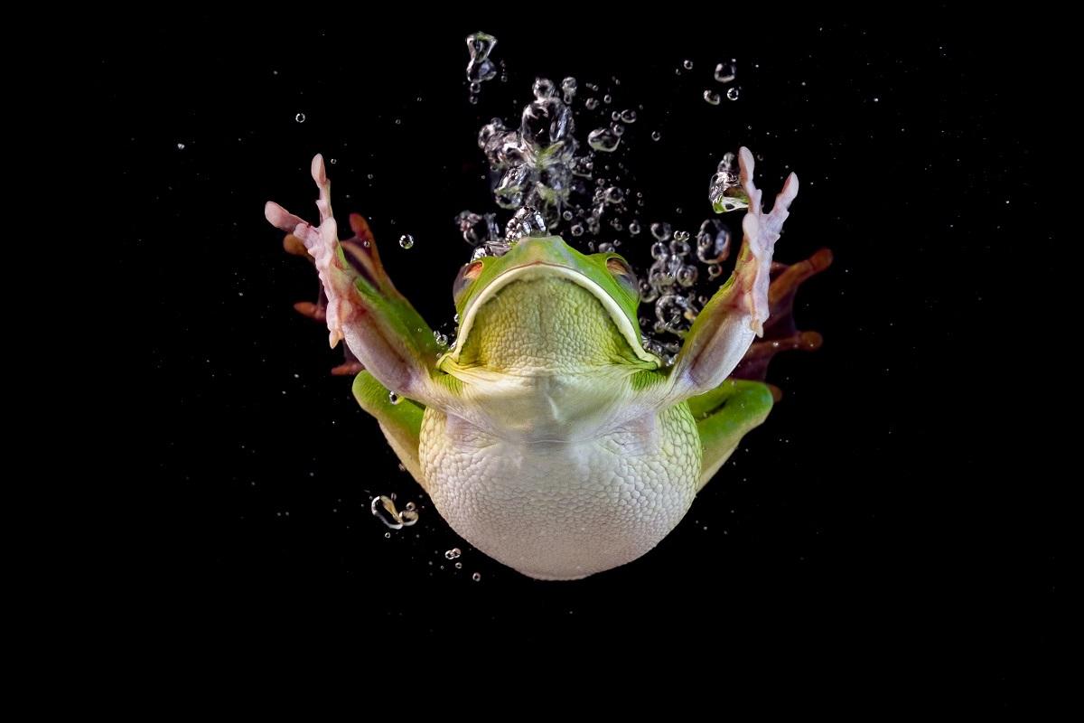 Skok do vody. Foto: Freepik