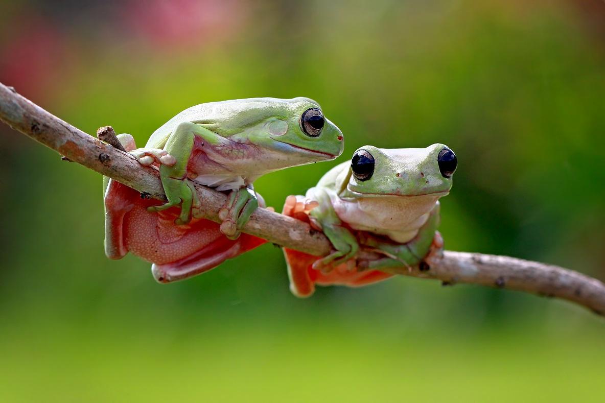 Půjdeš si se mnou večer skočit? Foto: Freepik