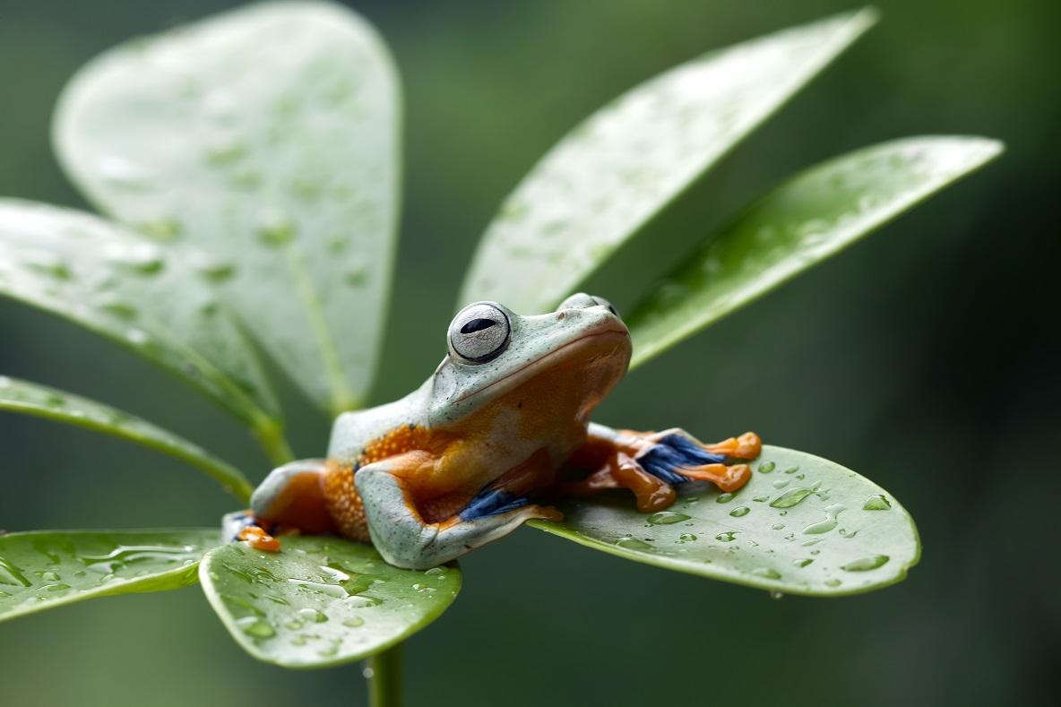 Opalovačka po dešti. Foto: Freepik
