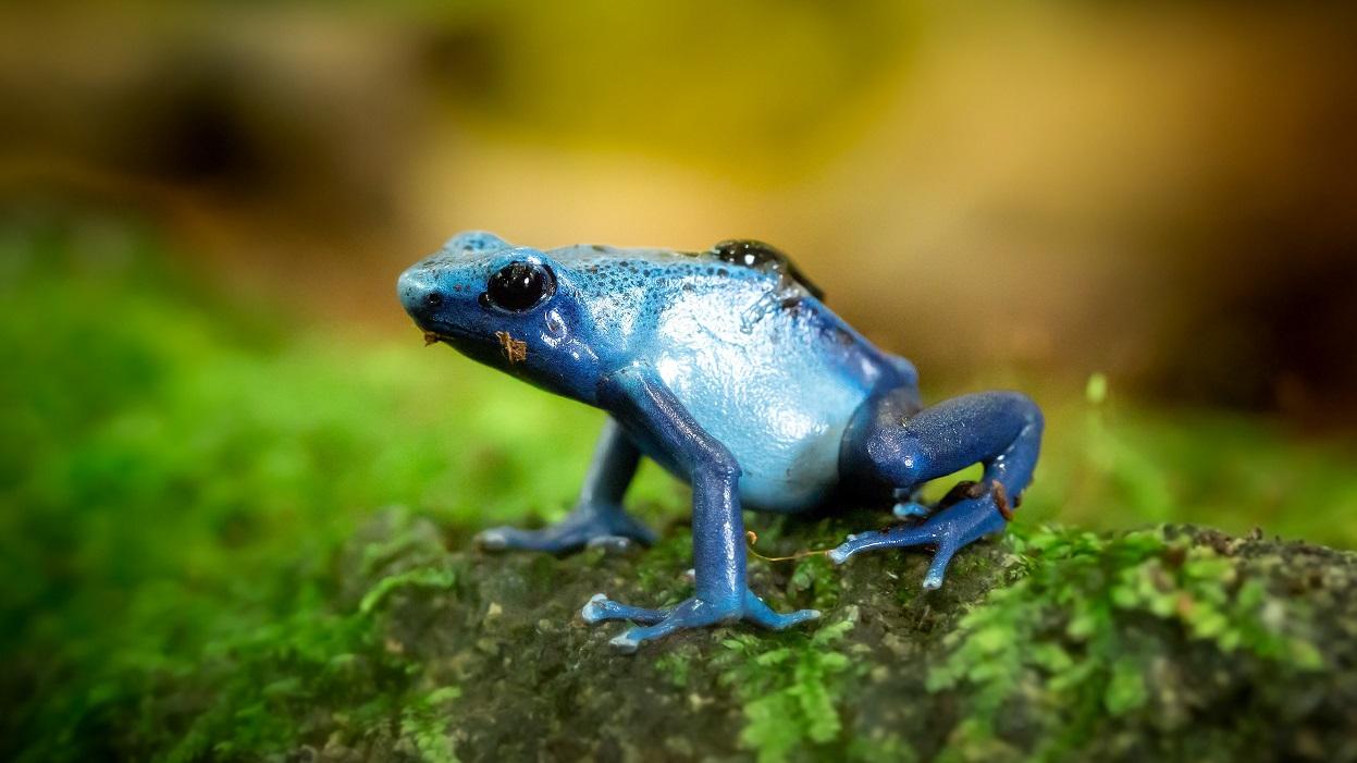 Modrá je dobrá. Foto: Pexels