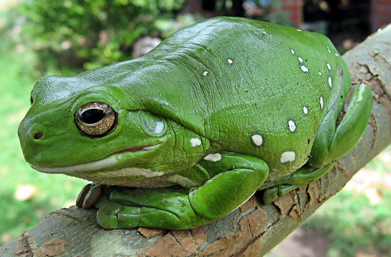 Jsem zelená závistí. Foto: Pixabay