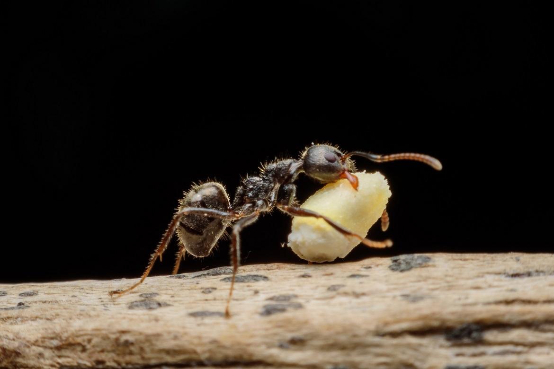 Ze života mravenců