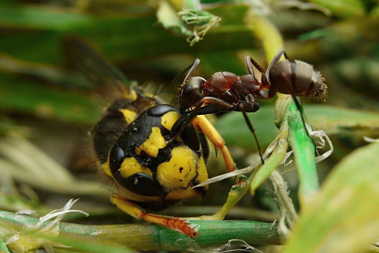 Ze života mravencůpixabay