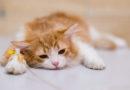 Výrobce stahuje několik šarží kočičích granulí. Mohou souviset s úmrtím koček