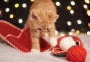 VIDEO: Vyrobte svému mazlíčkovi bylinkovou hračku