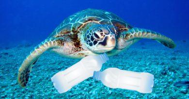 VIDEO: Plastů už je v mořích víc než ryb. Pojďme to změnit!