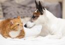 Spřátelí se pes a kočka v jedné domácnosti? Jistě. Polovina spí dokonce ve stejném pelechu