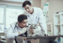 Veterináři nechtějí sloužit pohotovosti. Lidé chodí s banalitami. Klíště psovi vytáhneme i přes den, říkají