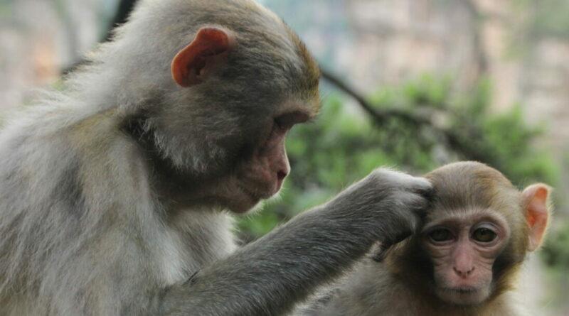 Nejen psi a kočky mají dobré srdce. Ale i potkani, opice či delfíni, vypozorovali vědci