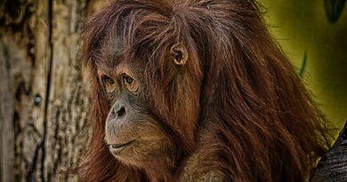 Zoologické zahrady zavřely z hodiny na hodinu. Počítají ztráty a prosí o pomoc