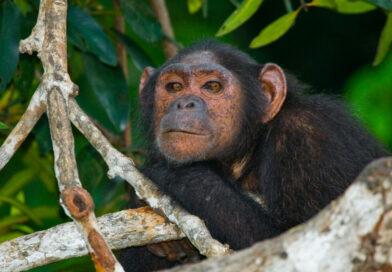Zvířata jsou mistři v samoléčbě. Znají lék na parazity, bolavé klouby i jedy