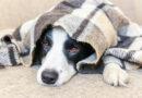 Trpí váš pes cukrovkou? Můžete jí onemocnět i vy