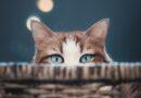 Jak vypadá byt očima mazlíčka? Podívejte se, co vidí kočka, pes nebo tarantule