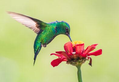 KVÍZ: Co všechno dovedou ptáci?