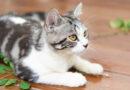 Šanta kočky nejenom omámí a uklidní. Ochrání je taky před komáry, zjistili vědci
