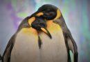 Na Antarktidě se mění podnebí, místo sněhu prší. Zabíjí to mláďata tučňáků