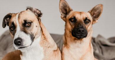 Hele, jiný pes! Domácí mazlíčci poznají, co se jim promítá v televizi
