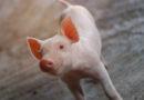 Někteří savci umí dýchat i zadkem. Kuriózní objev může v budoucnu zachraňovat lidské životy