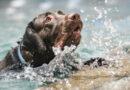Smrtící pasti pro ptáky i domácí mazlíčky: nezakryté bazény plné vody