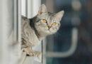 Kočka vypadla z okna a nabodla se na větev. Jen těsně minula srdce