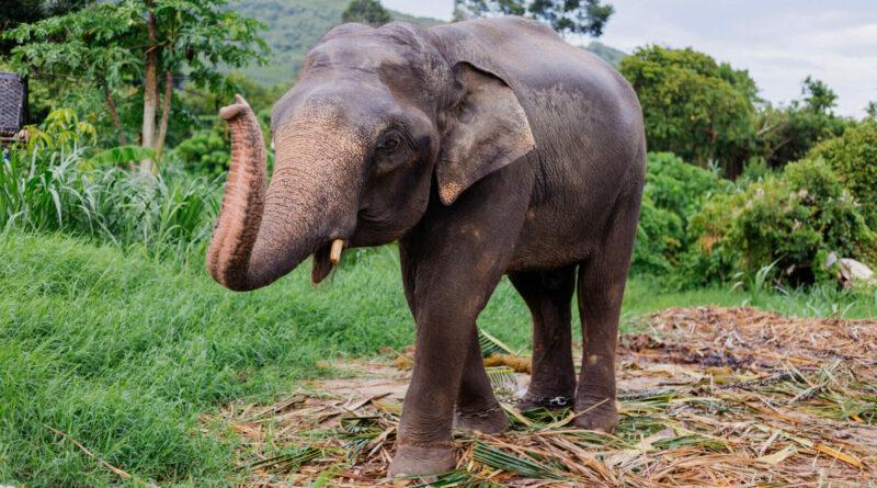 Video: Slon dojemně poděkoval lesníkovi, který mu pomohl z hluboké jámy