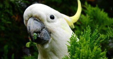 Papoušci se navzájem učí, jak rabovat popelnice. Podívejte se, jak jim to jde