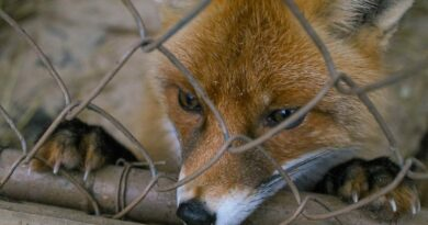 I zvířata mají právo na svého eurokomisaře, hlásají ochránci. Sebrali už skoro sto tisíc podpisů
