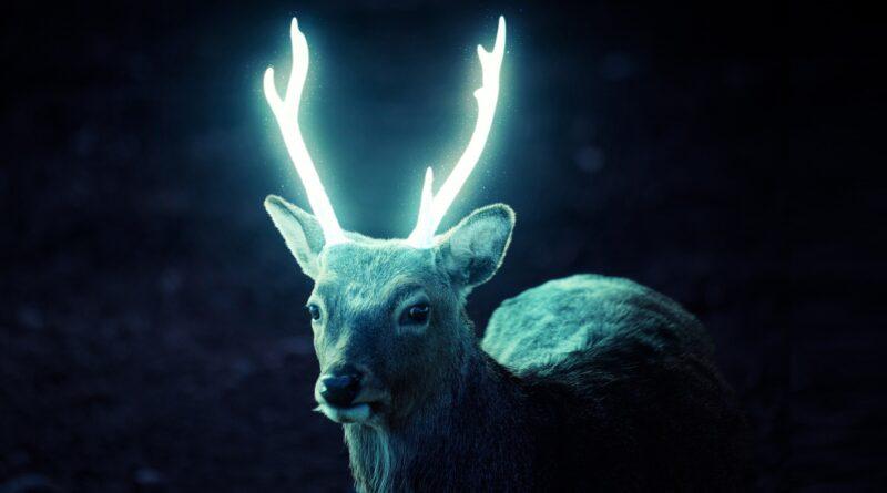Jako z Harryho Pottera. Po finských lesích běhají zvířata se světélkujícím parožím