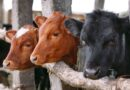 """Ochránci zvířat sestavují """"předvolební kalkulačku"""". Ukáže, které strany chtějí pomáhat zvířatům"""
