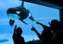 Video rozhořčilo ochránce zvířat. Nejosamělejší kosatka na něm buší hlavou o stěnu akvária