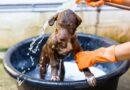 Kam se zabláceným psem? Do myčky! Samoobslužné psí salóny už pronikají i do Česka